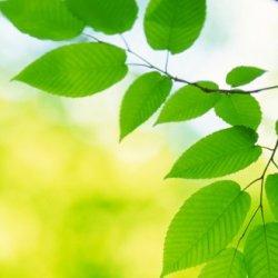 Ekologické výhody